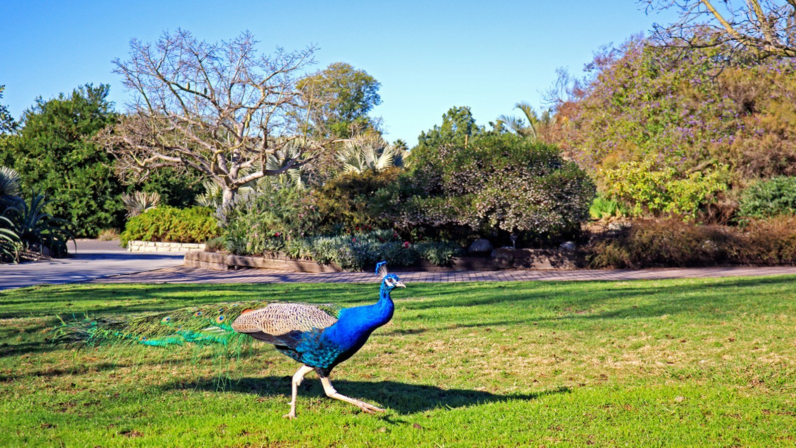 Parks And Gardens In Los Angeles Dorchester Collection