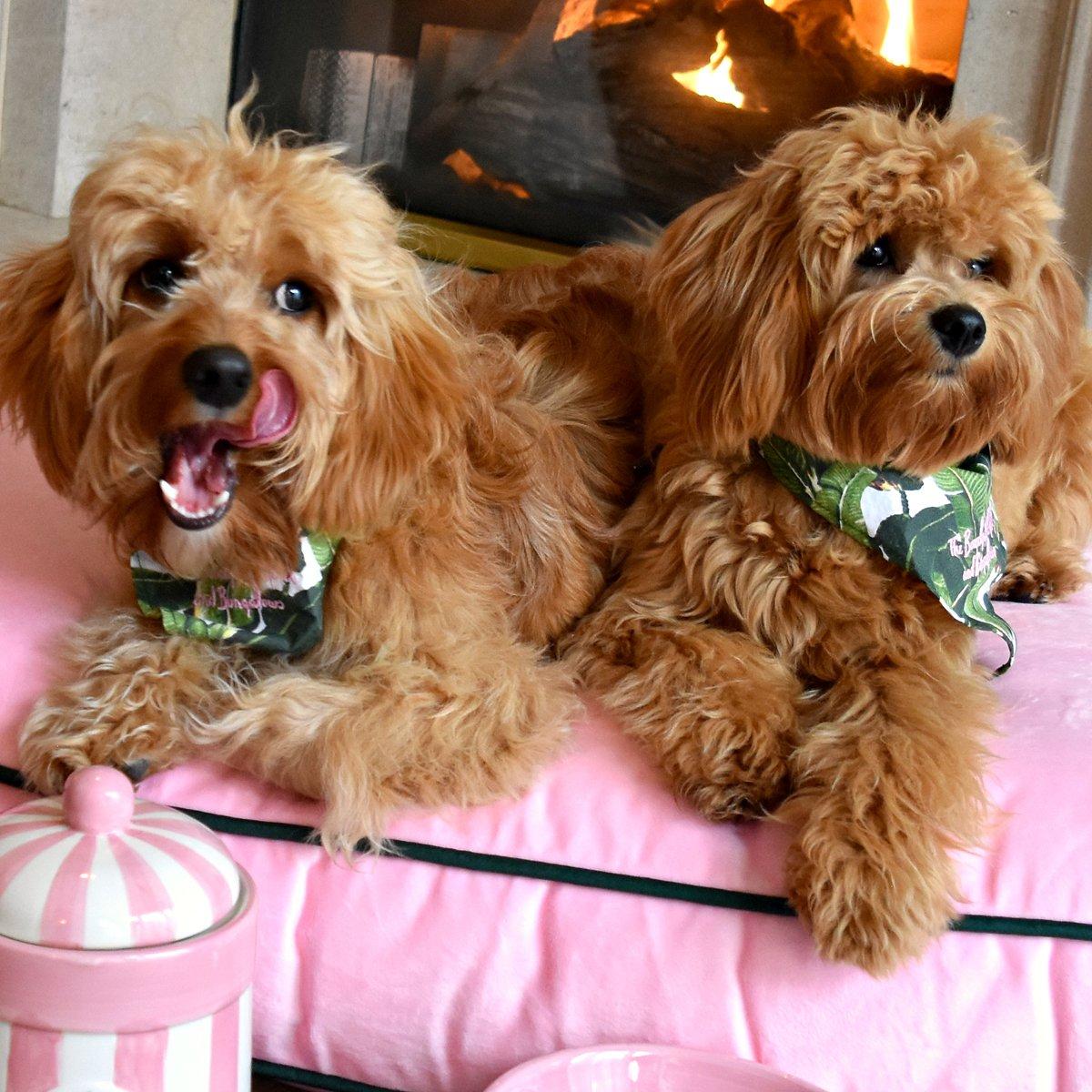 Canine connoisseurs