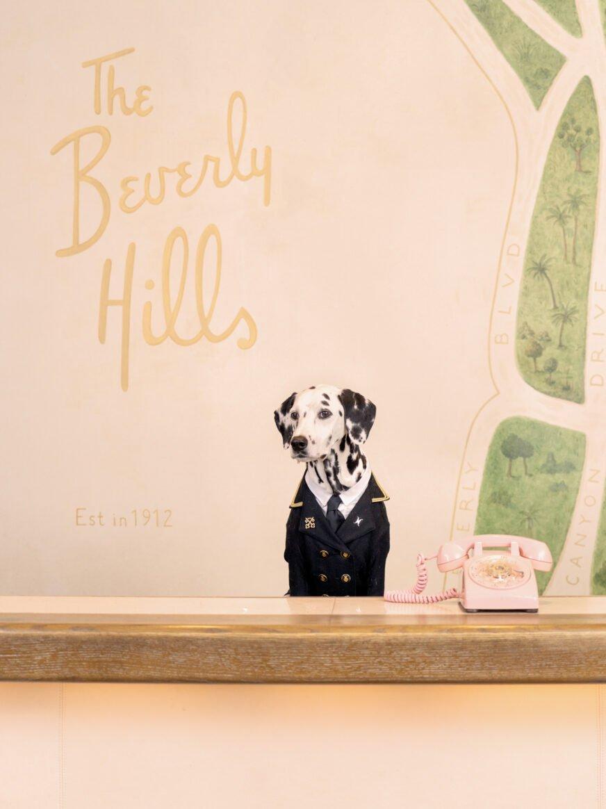 Gray Malin dog behind front desk