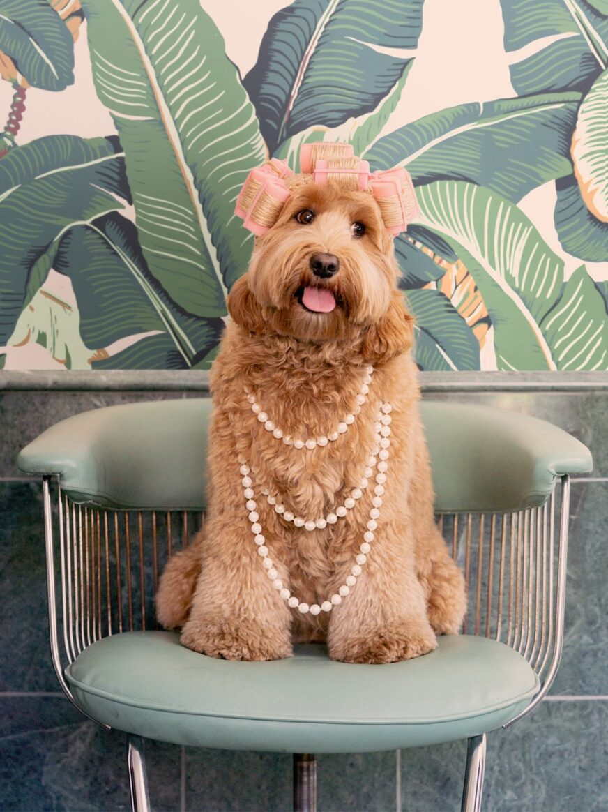 Pampered dog in chair with banana leaf background