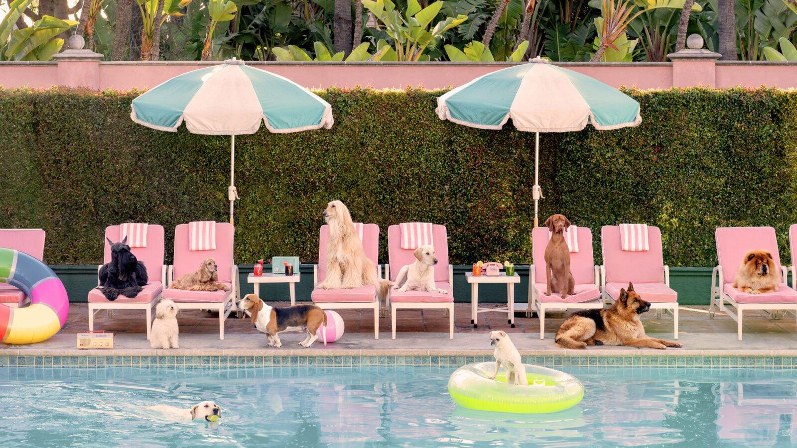 Gray Malin photographs dogs at the pool