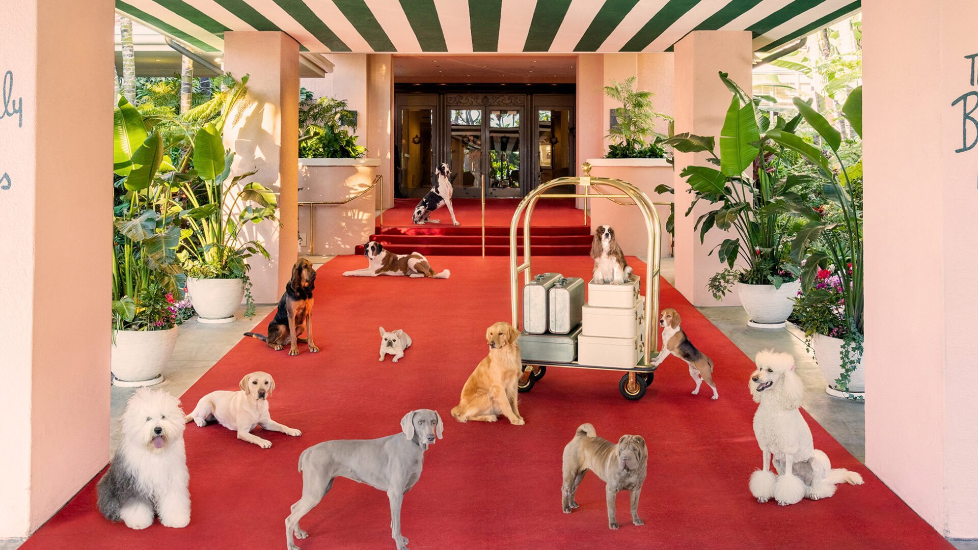 Staged dogs on the red carpet
