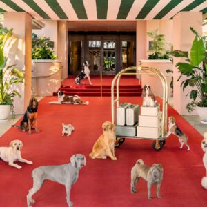 Gray Malin's Dogs at The Beverly Hills Hotel