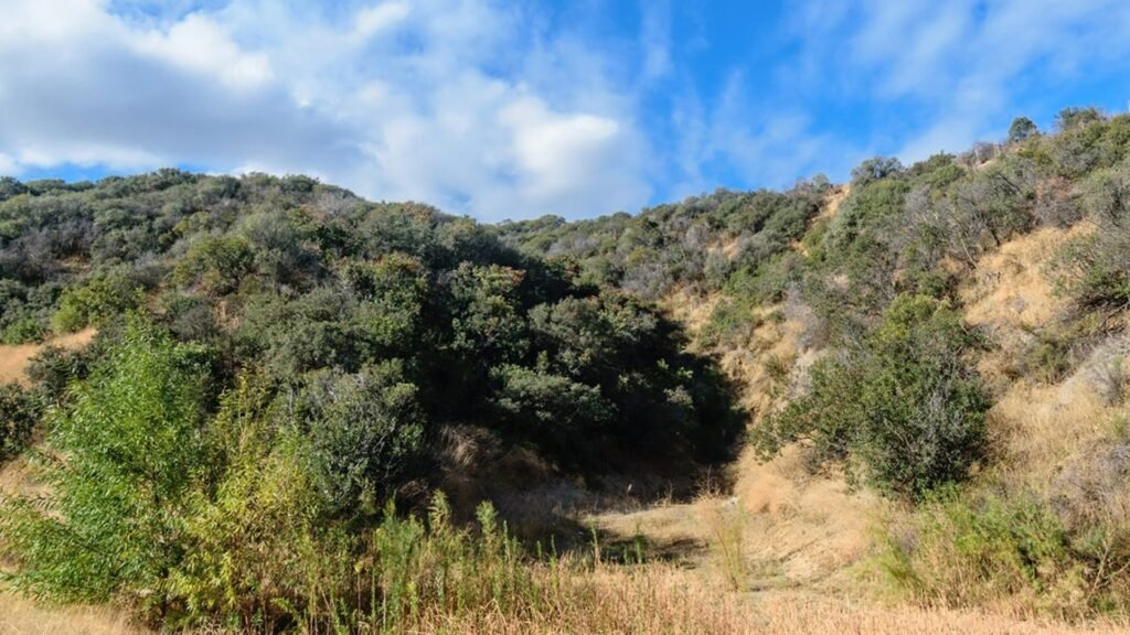 5 great walks and hikes in LA