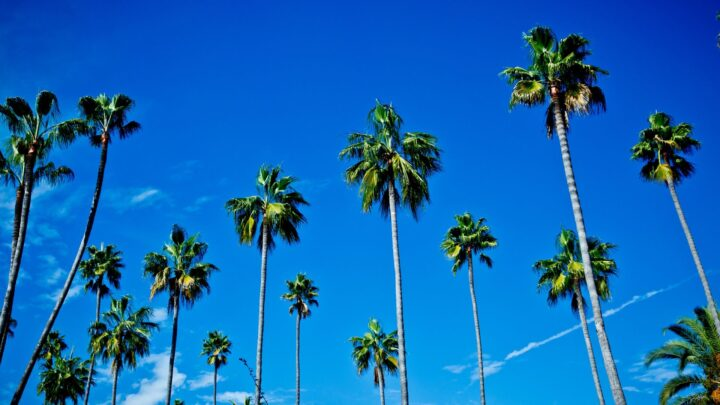 Palm trees and blue sky in Los Angeles