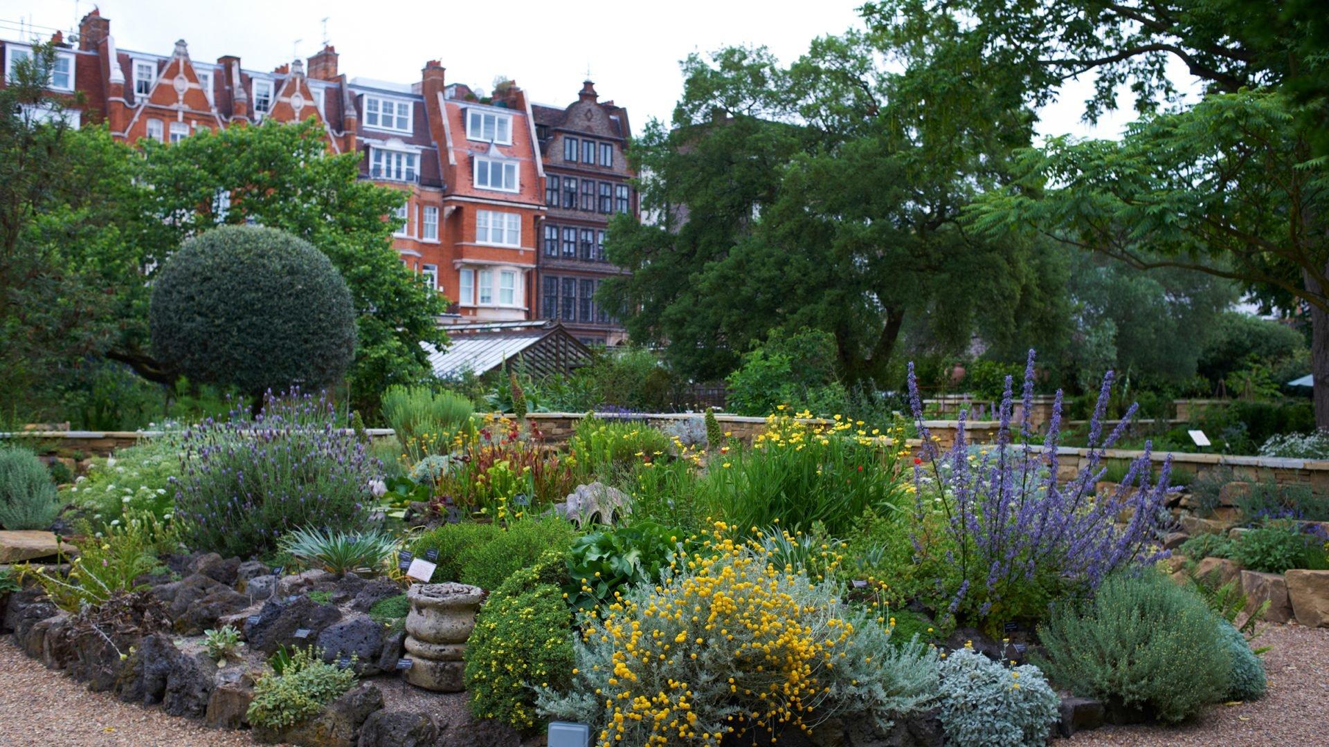 chelsea physic garden dorchester collection summer garden 2019 ideas what to do