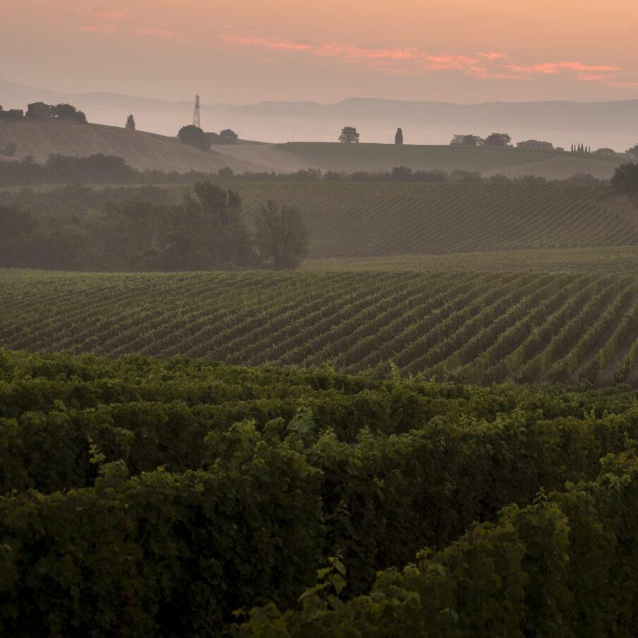 Famiglia Cotarella Vineyards