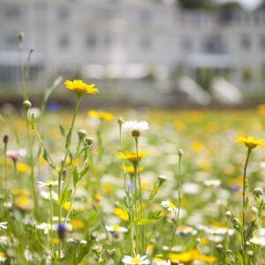 Walk through a summer spectacle detail