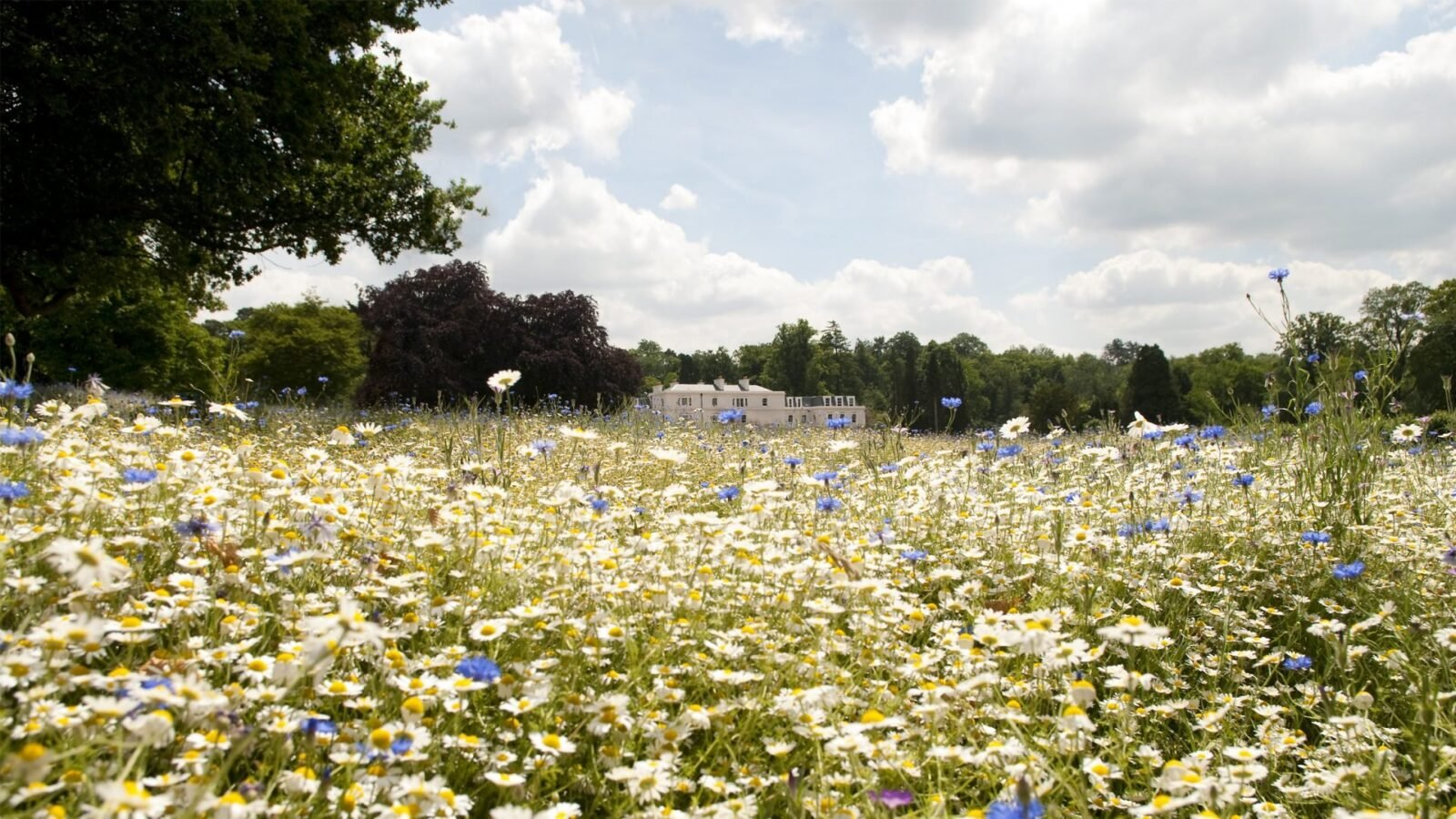 Magnificent meadow
