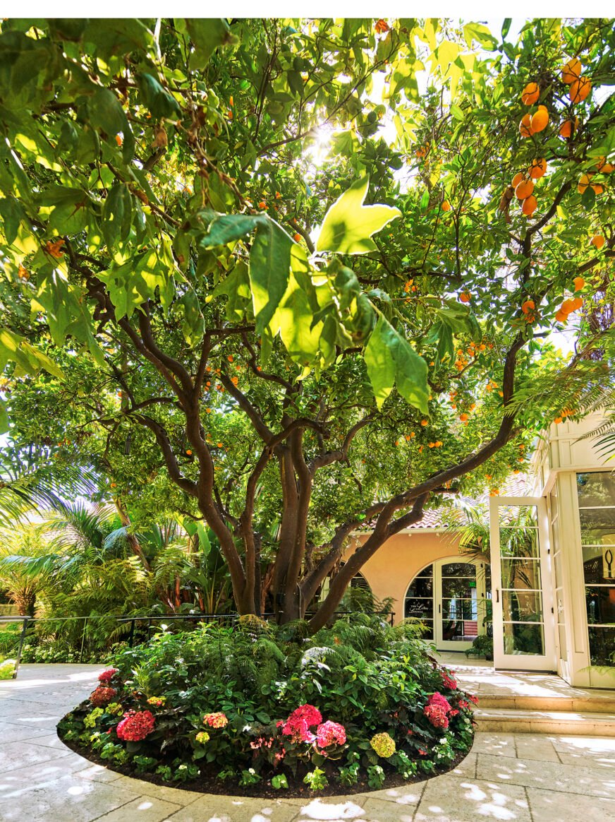 Citrus tree welcoming guests at reception
