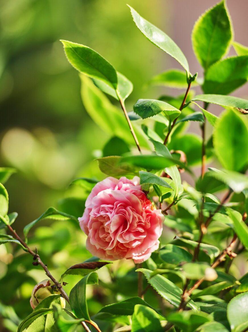 Up close floral