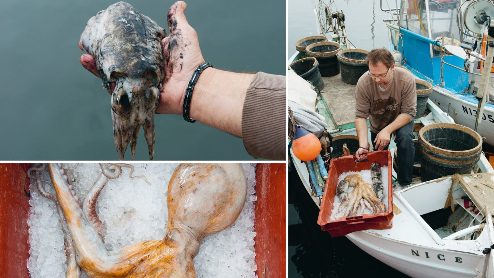 This image shows our fish producers at Hôtel Plaza Athénée