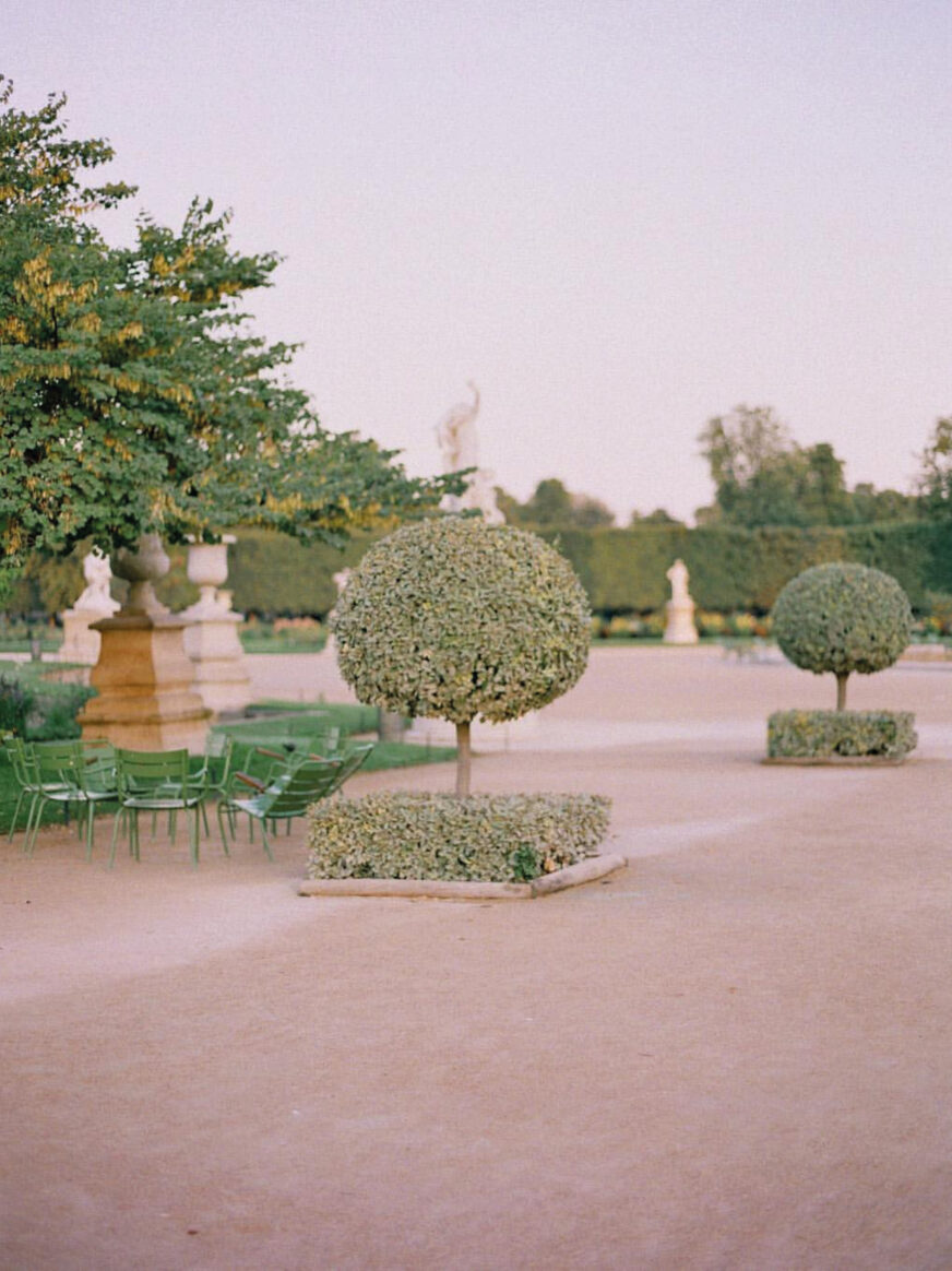 This image shows trees in the Tuileries garden